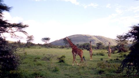 Kongoni_Sanctuary